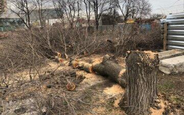 """Деревья  принялись массово уничтожать в Одессе, фото: """"всё ради АЗС"""""""
