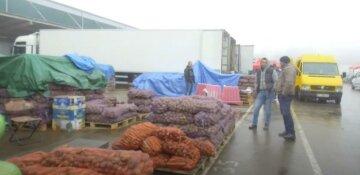 """Украинцам объяснили, почему картошка им уже не по карману:  """"Цена будет расти"""""""