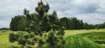 Общественные активисты создали зеленую зону с гольф-центром на месте свалки в Конча-Заспе под Киевом