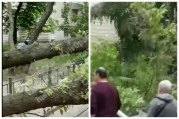 """""""Людей призывают быть осторожными"""": ураган обрушился на Киев, кадры последствий непогоды"""