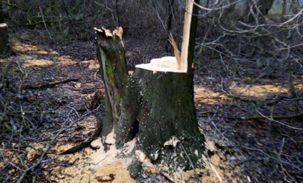 Лес принялись уничтожать на Одесчине: варварский поступок попал на камеру