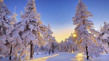 лес, зима