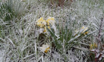 Заморозки в середині квітня: синоптики попередили про погодні аномалії на Одещині