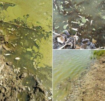 """На Харківщині почався масовий мор риби, фото: """"На поверхні води виявлена..."""""""