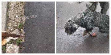 Одеситка під час прогулянки не втримала свою собаку, відео: все закінчилося сумно