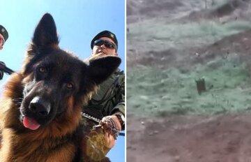 На Донбасі собака врятував життя українським військовим: що сталося