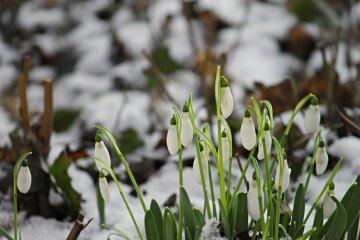прогноз погоды на март весна подснежники