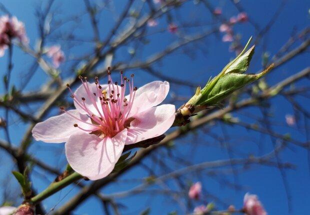 23 квітня – яке сьогодні свято і чий День ангела