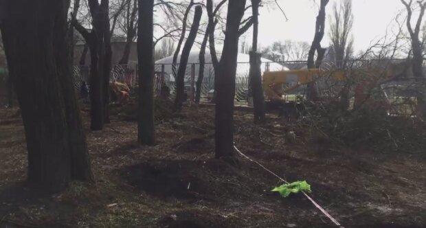 """Массовая вырубка деревьев в центре Одессы попала на видео: """"всё ради парковки"""""""