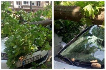 """ЧП в центре Одессы: рухнувшее дерево раздавило авто туристов, """"приехали на отдых с детьми"""""""