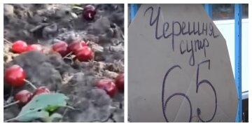 """Украинка уничтожила 50 гектаров сада черешни: """"Откройте нам границы"""""""