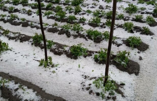 Погода в Україні остаточно злетіла з котушок, кучугури ростуть: фото травневого снігу