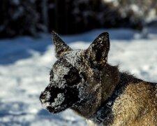 собака, лед, обледенение, зима, холод