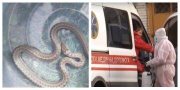 Змея укусила 4-летнюю девочку: за ребенка борются врачи