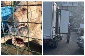 Изуверы порезали бездомных собак под Одессой: кадры дикости