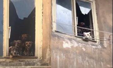 """Собак замучали в центре Одессы, видео: """"закрыли в квартире и..."""""""