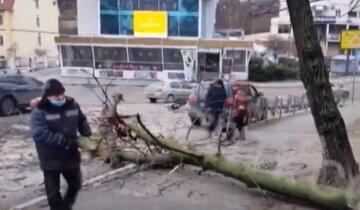 НП на дорозі: у Києві на проїжджу частину впав стовп і дерево, фото з місця