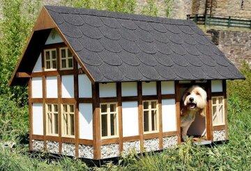 doghouse-1