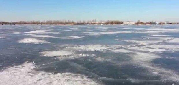 """Под Киевом спасатели кинулись на помощь лебедям-заложникам: """"примерзли ко льду"""""""