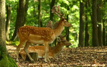 охота в лесах, сезон тишины, лес, животные, запрет на охоту