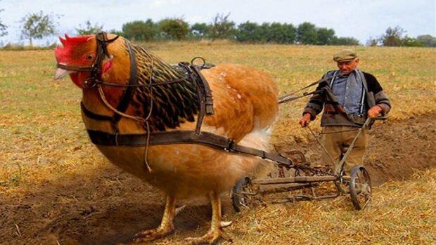 Золотая курица