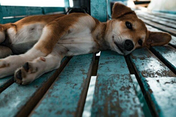 Собачникам Харькова оставили пугающее послание: «Дорожите жизнью?»