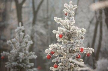 зима снег елка лес
