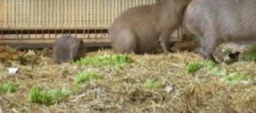 """В экопарке Харькова родились экзотические животные, фото: """"невероятно любознательны и игривы"""""""
