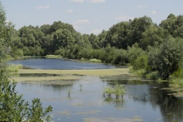 Депутат с палкой напал на детей у озера на Киевщине: детали инцидента