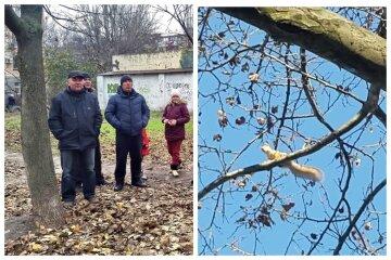 """Десятки деревьев уничтожат ради новой парковки в Одессе, жители всполошились: """"На них живут белки"""""""