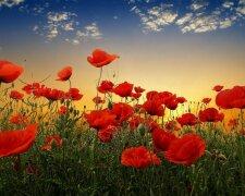 День памяти и примирения 8 мая: все, что нужно знать о празднике