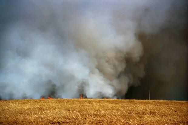 """На Харківщині вирують масштабні пожежі: """"Десятки гектарів..."""""""
