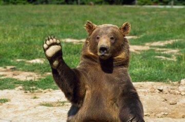 Финн с руганью и шваброй прогнал медведя с крыльца (видео)