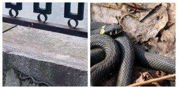 """По Харкову """"розгулює"""" величезна змія, жителі стривожені: відео облетіло мережу"""