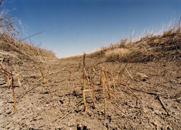Одесскую область накрыла рекордная засуха: стало известно о первых потерях