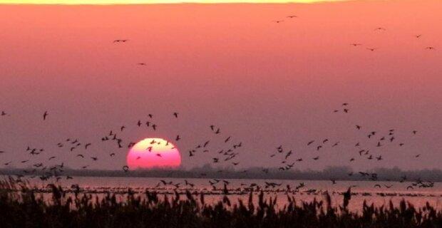 Уникальное природное явление наблюдали в небе над Одесчиной: фото красоты