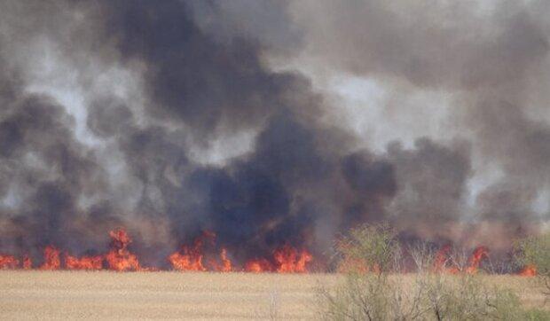Масштабный пожар охватил природный парк под Одессой: кадры происшествия