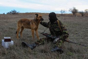 Донбасс, боевик, собака