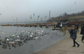 Унікальне явище в Одесі: у нацпарку помітили рідкісних тварин, фото