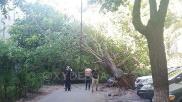 НП в Одесі: дерево перекрило двір і розчавило машини, відео
