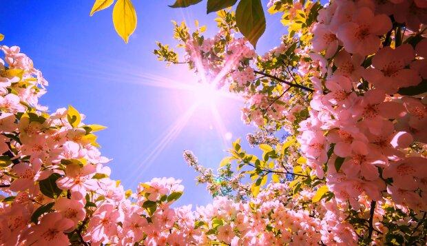 kartinki24_ru_spring_102