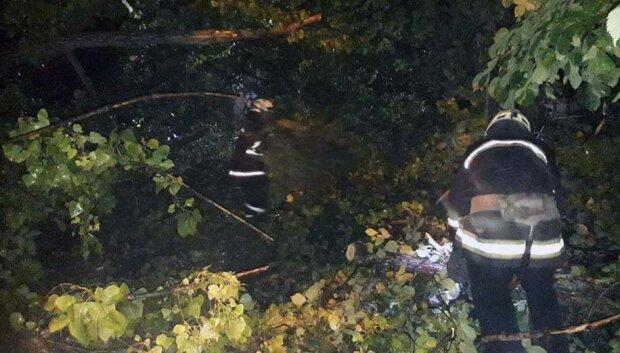 Огромный тополь рухнул в детсаду Днепра, фото: спасатели бросились на помощь