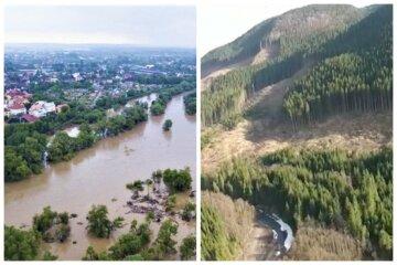 Карпати в небезпеці, ліси зникають із загрозливою швидкістю: чим це загрожує українцям