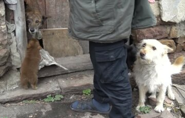 """""""Врятувати було неможливо"""": голодні собаки розтерзали пенсіонерку на Тернопільщині, кадри"""