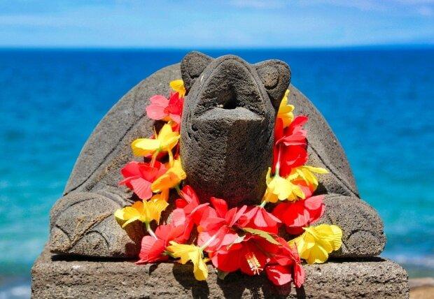 черепаха 1