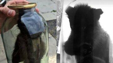 """На Львовщине парень поиздевался над котенком, фото: """"закрыл в банке и..."""""""
