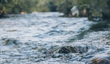 """Екзотичну рибу спіймали в одеській водоймі, фото: """"коштує близько 2 тисяч"""""""