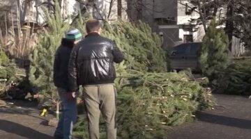 В Днепре появились новогодние елки: где и почем можно будет купить зеленую красавицу