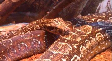 В Одесі жителі зустріли величезну змію: кадри облетіли мережу