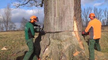 """Массовую вырубку деревьев устроили на Днепропетровщине, ущерб на сотни тысяч: """"втроем приехали в лес и..."""""""